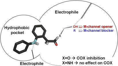 Pharmacophoric features of M-channels deduced from SAR studies of diphenylamine derivatives.