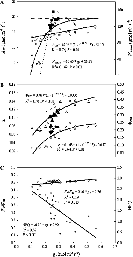 Responses of photosynthetic potential and photochemical activities to stomatal conductance (gs). (A) Open squares, Asat light-saturated CO2 accumulation rate; filled squares, Asat after rewatering; crosses, Vc,max maximum carboxylation velocity. The dotted line denotes the initial Asat response to gs; the dashed line denotes Asat=constant value of Asat,maX estimated; and the intersection of the two lines represents a point at which Asat initially levelled off. (B) Open circles, α maximum photosynthetic quantum yield of CO2 uptake; filled circles, α after rewatering; open triangles, ΦPSII the actual PSII efficiency; filled traingles, ΦPSII after rewatering. (C) Open squares, the maximal efficiency of PSII photochemistry (Fv/Fm); open diamonds, non-photochemical quenching (NPQ).
