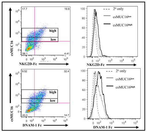 DNAM-1 and NKG2D ligand expression is comparable on csMUC16high expressing OVCAR-3 cells. OVCAR-3 cells were stained for csMUC16 expression, and then NKG2D-Fc or DNAM-1-Fc and an appropriate secondary antibody were added. Cells were initially gated on live single events of tumor cells that were csMUC16low or csMUC16high. The binding of NKG2D-Fc or DNAM-1 to gated csMUC16low (gray line) and csMUC16high (black line) is shown in histogram form. Data is representative of three independent experiments.