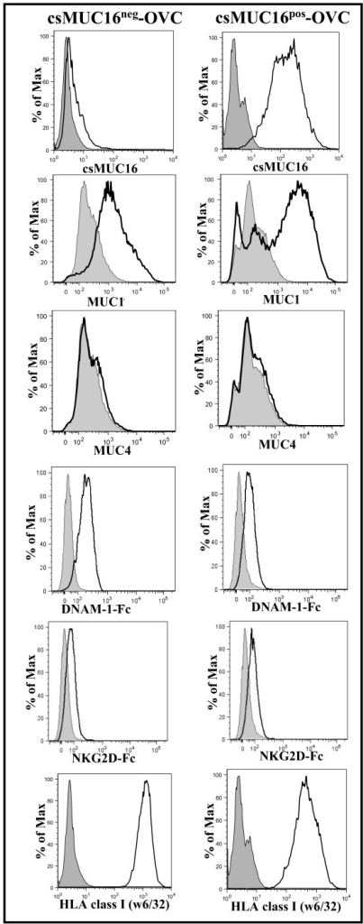 Expression of mucins and NK cell activating and inhibitory molecules on csMUC16neg-OVC and csMUC16pos-OVC. MUC1 expression on both sublines is similar and MUC4 expression is absent. Expression of DNAM-1 and NKG2D ligands on the sublines was determined by staining with Fc chimeras (15 μg/mL) of these two receptors followed by labeling with fluorophore conjugated anti-Fc secondary antibody. HLA class I expression on the sublines was determined by labeling with FITC conjugated w6/32. Histograms of live single events are shown in all plots. Data is representative of three independent experiments. Shaded peaks show control cells incubated with only the fluorescently-tagged secondary antibodies. Un-shaded histograms are for cells incubated with the primary antibodies or Fc chimeras and the fluorescently labeled secondary antibodies.