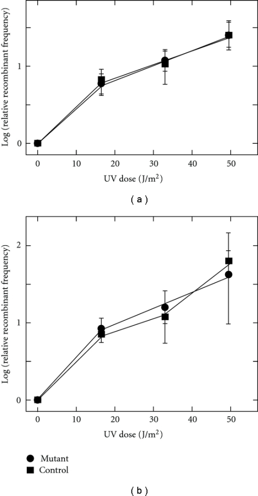 Stimulation of marker exchange (SME) by UV. Relative frequency of recombinants in response to indicated UV fluence  UV was from an unfiltered germicidal lamp and the doses correspond to the short-wavelength portion of the output (λ < 300 nm). (a) CS1 (circles) versus DG185 (squares).  (b) CS3 (circles) versus DG185 (squares).