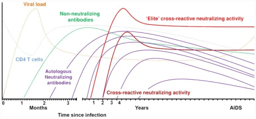 Sequentially elicited antibodies to HIV-1 envelope over the course of the infection.