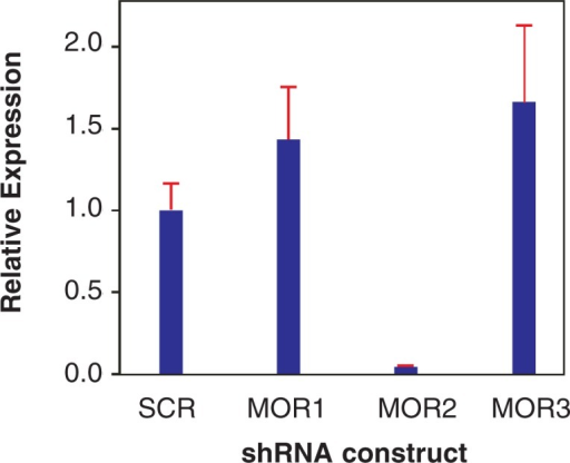 "Example of the effectiveness of knock-down of expression of the μ-opioid receptor (MOR) by different small-hairpin RNAs (shRNAs). Shown is the relative level of MOR expression after introduction of three different shRNAs or a control construct (i.e., a construct containing a ""scrambled"" shRNA that should not target any mouse or rat gene) into cells stably expressing MOR. The results show that at 48 hours after the introduction of the three constructs and the control, construct MOR2 is most effective, essentially shutting down the cell's MOR production."