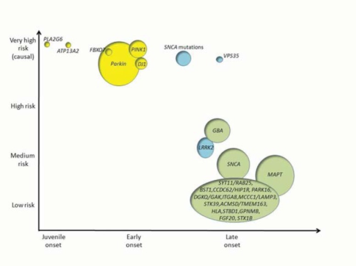 Schematic representation of the genetic architecture of PD. The Y axis shows the strength of genetic effects and the X axis indicatesthe age at onset of disease. Autosomal recessive genes are presented in yellow; autosomal dominant genes in blue and risk loci in green. Thesize of each circle is an approximation of the population attributable risk (PAR), that is, the proportion of PD that is ascribable to a mutationor a genetic risk variant at any gene. Percentages of PAR in genetic risk loci are based on references 56, 59 and 79. For genes related tomonogenic forms of disease (PLA2G6, ATP13A2, FBOX7, PARK2, PINK1, DJ1, SNCA and VPS35) % of PAR have limited value due to therarity of the deleterious alleles in the population and therefore the circle size represents an approximation of the % of cases due to knowngenetic causes. Relative risks for each loci are based on evidence from the PD gene database (www.pdgene.org).