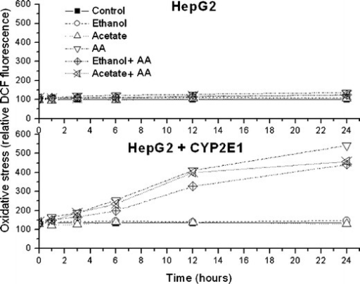 The effect of arachidonic acid (AA; 60 μM) on oxidative stress in HepG2 and HepG2 cells overexpressing CYP2E1. Oxidative stress was assessed 1, 3, 6, 12, and 24 h after AA treatment using flow cytometry detection of dichlorofluorescein diacetate fluorescence. The same AA treatment was done in cells grown prior to the treatment for 1 week in culture medium supplemented with 1 mM acetate (Acetate + AA) or 100 mM ethanol (Ethanol + AA). Mean DCF values after 24 h of AA treatments are also shown in Table 1