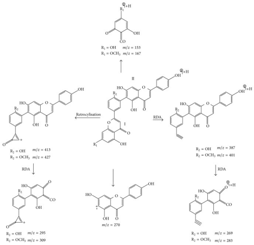 Proposed fragmentation pathways of robustaflavone-type biflavonoid on the basis of their MS2 and MS3 spectra.