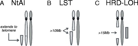 Overview of the type of genomic scars measured by each HR signature. Dark and light grey are used to indicate paternal and maternal chromosomes. A: Number of telomeric allelic imbalances (NtAI) counts the number of subtelomeric regions with allelic imbalance, that start beyond the centromere and extend to the telomere. B: Large-scale state transitions (LST) counts the number of chromosomal breaks between adjacent regions of at least 10 Mb. C: Homologous recombination deficiency score (HRD-LOH) measures the number of regions with LOH which are larger than 15 Mb, but shorter than the whole chromosome.