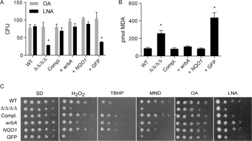 Heterologous expression of E. coli wrbA or rat NQO1 rescues the sensitivity of Δ/Δ/Δ/Δ mutant to oxidants.The distinct NAD(P)H quinone oxidoreductase genes wrbA and NQO1 were expressed in the Δ/Δ/Δ/Δ strain under control of the ADH1 promoter. A control strain was also constructed in a similar manner that expressed GFP. The cells were then incubated with 0.5 mM linolenic acid (LNA) for 6 h at 37˚C and then (A) assayed for viable CFUs or (B) assayed for TBARS as an indicator of lipid peroxidation. Some cells in panel A were also incubated with oleic acid (OA) as a control. (C) Dilutions of cells were spotted onto different agar plates containing synthetic medium and the indicated oxidant, and then incubated at 37°C for 2 d. The plates contained H2O2, tert-butyl hydroperoxide (TBHP), cumene hydroperoxide (CHP), menadione (MND), monounsaturated oleic acid (OA), and polyunsaturated linolenic acid (LNA). Strains used included the wild type control strain LLF100, Δ/Δ/Δ/Δ strain LLF060, the complemented strain LLF079, and the Δ/Δ/Δ/Δ strain in which E. coli wrbA (LLF074), rat NQO1 (LLF076) or GFP (LLF080) was expressed under control of the constitutive ADH1 promoter. Error bars indicate SE. *, p <0.05 by ANOVA.