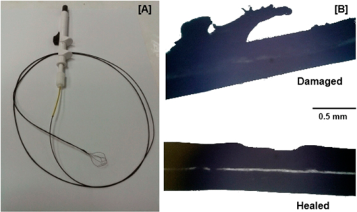 (A) NiTiNOL guidewire coated with 20 wt% Magpol. (B) Damaged portions of the coated wire were subjected to recovery in an AMF for 20 min, resulting in shape memory assisted self healing.