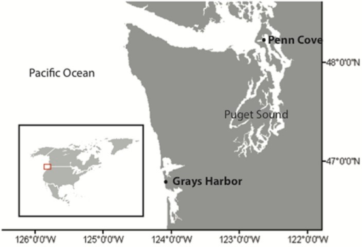 Locations of sampling. Penn Cove, located in the Puget Sound estuary, and Grays Harbor located on the coast of Washington state, USA. Inset map of North America shows the region of sampling.