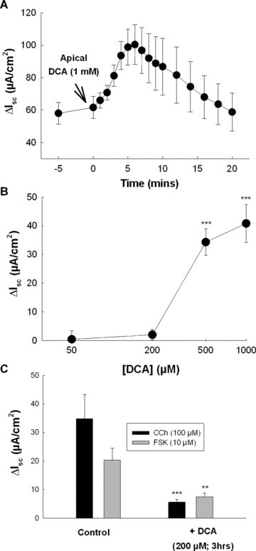 Prolonged exposure to physiological concentrations of DCA inhibits Cl− secretion across rat colon. (A) Voltage‐clamped segments of stripped rat colonic mucosa were apically exposed to DCA (1 mM) and Isc responses were recorded (n= 5). (B) Voltage‐clamped sections of rat colon were exposed to increasing concentrations of apical DCA and maximal Isc responses were measured (n= 4–7 for each concentration tested). (C) Voltage‐clamped rat colonic mucosa was exposed to 200 μM apical DCA and after 3 hrs incubation subsequent Isc responses to CCh (100 μM; n= 4) and FSK (10 μM; n= 5) were measured. ***P < 0.005 when compared to control cells.
