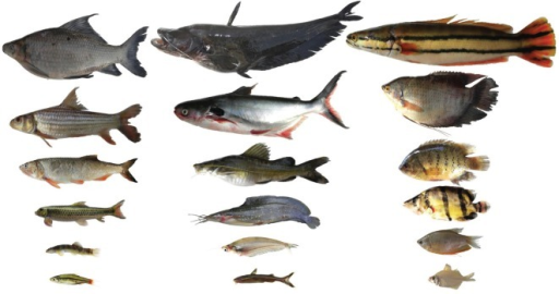 Examples Of A Range Of Body Sizes Among Fish Species Of Open I