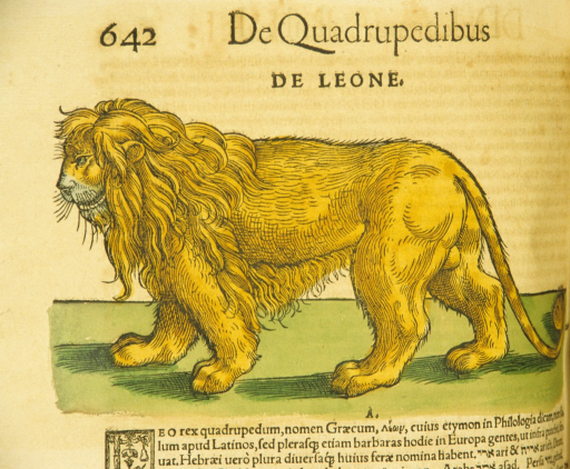 <p>Hand-colored woodcut of a lion in profile.</p>