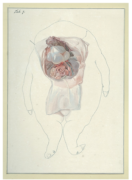 <p>A headless pig fetus with exposed organs. Pinned down string holds open the skin.</p>