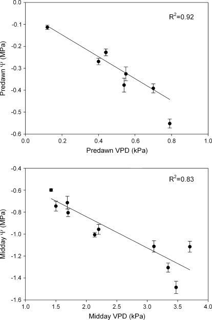 Predawn (R2=0.92, P <0.001, n=12) and midday (R2=0.83, P <0.001, n=24) leaf water potential (Ψl) of Semillon field vines correlated against VPD at the time of measurement. The vines were drip irrigated and readily available soil water ranged from 50% to 80% on each day of measurement.
