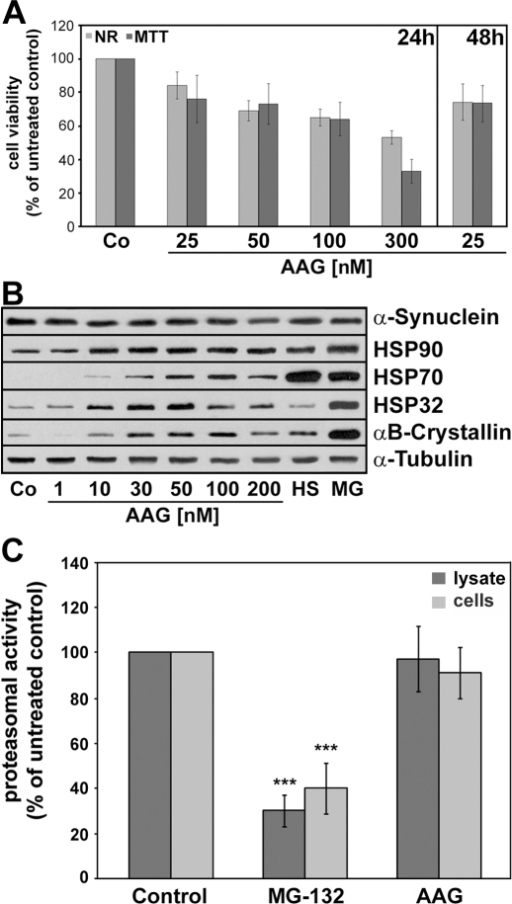 17-AAG induces a heat shock response in OLN-A53T cells and does not impair proteasomal activity.(A) Determination of cytotoxic potential. Cells were exposed to different concentrations of 17-AAG as indicated. After 24 h, neutral red and MTT assays were carried out. Values represent the mean ± SEM of 16 microwells each of two independent experiments (n = 32). (B) Immunoblot analysis of heat shock protein induction. Cells were treated with 17-AAG (1–200 nM, 24 h), or subjected to heat shock (HS: 44°C, 30 min, 24 h recovery) or to MG-132 (MG: 1 µM, 24 h). Cell lysates were prepared and immunoblot analysis was carried out with antibodies against the individual proteins as indicated on the right. Co, untreated control. (C) Proteasomal activity was determined in cell lysates treated with 17-AAG (lysate) and in cell lysates prepared from 17-AAG treated live cells (cells). Cytoplasmic lysates were incubated with the proteasomal inhibitor MG-132 (1 µM, 60 min) as a positive control, or 17-AAG (50 nM, 60 min). Cells were treated with MG-132 (1 µM, 24 h) and 17-AAG (50 nM, 24 h). The post-glutamyl-peptidase-hydrolase activity was determined using fluorogenic substrate Z-Leu-Leu-Glu-AMC (see Materials and Methods). The cleavage of the substrate is inhibited by MG-132 but not by 17-AAG. Data are expressed as percent of the untreated control and show the mean ± SEM from 3 independent experiments. Statistical evaluation was carried out by ANOVA/Fisher's LSD: ***p≤0.01 for MG-132 versus control.