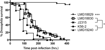 Survival curves for D. melanogaster infected with B. cenocepacia strains.Pricking assays were performed with a minimum of 30 flies for each strain. Statistical significance (Log-rank analysis (Mantel-Cox)) between survival curves is shown with *p<0.05 and ***p<0.0005.