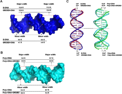DNA groove parameters of B-DNA, GRDBD+DNA, Poly+DNA and ...