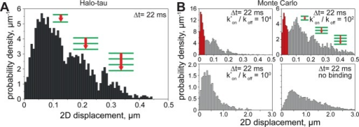 Step-size distribution analysis and Monte Carlo simulation indicate jumps of tau between microtubules. (A) SSD analysis of >1000 pseudotrajectories indicating subpopulations of jumps between MTs. The peaks in the histogram correspond to 1 → 2, 1 → 3, and 1 → 4 hops between MTs. (B) SSD analysis of simulated pseudotrajectories at different pseudoequilibrium constants (kon*/koff). Note that the histogram at kon*/koff= 102 closely resembles the data shown in A. The Monte Carlo simulation revealed an additional peak (indicated in red), which was not resolved by imaging.