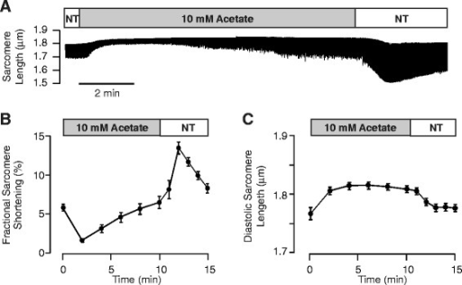 Acetate causes a transient decrease of fractional sarcomere shortening and an increase in diastolic sarcomere length in isolated mouse cardiac myocytes. (A) Representative recording of average sarcomere length assessed continuously throughout application and removal of normal Tyrode solution (NT) supplemented with 10 mM sodium acetate. Summary data from experiments as in A (n = 15), illustrating the effects of acetate on (B) fractional sarcomere shortening and (C) diastolic sarcomere length.