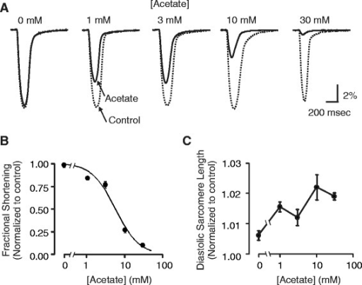 Concentration-dependence of acetate effect on fractional shortening and diastolic sarcomere length. (A) Single averaged contractions acquired in experiments as described in Figure 1 at different concentrations of sodium acetate. Contractions in normal Tyrode (Control, dotted line) and at 2 minutes following exposure to acetate solution (Acetate, solid line) are shown. 10 mM NaCl, instead of sodium acetate, was added to normal Tyrode to collect the zero acetate data. (B) Acetate concentration response curve for maximum contraction inhibition. Data were fit with a modified Hill equation (solid line): FS/FS0 = 1/(1 + ([Acetate]/IC50)h), where IC50 is the half-maximal inhibitory concentration of acetate (IC50 = 5.6 mM) and h is the Hill coefficient (h = 1.3). (C) There was no apparent acetate concentration dependence on diastolic sarcomere length.