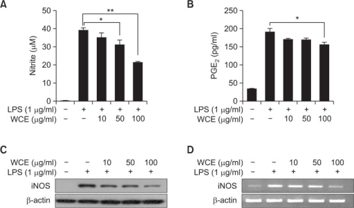 Effects of WCE on LPS-induced NO and PGE2 production, and iNOS expression. (A) RAW 264.7 cells were treated with 1 μg/mL of LPS alone or in combination with varying concentrations of WCE for a nitrite assay. The extracellular medium containing nitrate was analyzed by a Griess regent system. (B) The PGE2 concentration in the supernatants was determined by ELISA *p<0.05, **p<0.01 compared to the LPS treated group. Values are presented as means ± standard error of the mean (SEM). (C) Western blot analysis of iNOS. β-actin was used as an internal standard. (D) RT-PCR analysis of iNOS. β-actin was used as an internal standard. The PCR products were resolved on a 2% agarose gel.