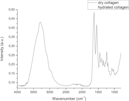 Mean infrared type I collagen spectrum obtained for dry membranes and membranes washed with Milli-Q water (hydrated) in region from 3800 to 800 cm−1.