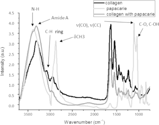 Mean infrared type I collagen spectrum obtained for hydrated type I collagen membrane, PapacarieTM and type I collagen membranes treated with PapacarieTM in region from 3800 to 800 cm−1 (arrows indicate main infrared absorption bands for PapacarieTM).