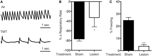 TMT reduces breathing and evokes freezing. (A) Representative plethysmography traces from a sham mouse in air and TMT. (B) TMT exposure dramatically reduces respiratory rate. This reduction in breathing rate is attenuated by olfactory bulb lesions [One-tailed t-test, t(4) = 2.239, *p = 0.0443, n = 5 per group]. (C) TMT also evoked freezing which was largely abolished by olfactory bulb lesions [t(9) = 7.069, ***p < 0.0001, sham n = 6, lesion n = 5].