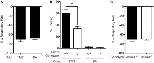 Butyric acid reduces breathing rate but does not evoke freezing. (A) Exposure to either TMT or butyric acid elicits a similar reduction in breathing rate in wild-type mice [t(5) = 0.2768, p = 0.7930, TMT n = 5, butyric acid n = 2]. (B) Exposure to TMT, but not butyric acid (BA) elicits robust freezing behavior and Asic1a disruption attenuated TMT-evoked freezing. A Two-Way ANOVA revealed an effect of genotype [F(1, 34) = 13.39, p = 0.0009, from left to right n = 10, 10, 9, 9, respectively], an effect of odor [F(1, 34) = 141.7, p < 0.0001] and a genotype by odor interaction [F(1, 34) = 10.78, p = 0.0024]. Planned contrast testing demonstrated that Asic1a−/− mice had a reduction in freezing to TMT (**p = 0.0016), but not butyric acid (BA) (p = 0.2673). (C)Asic1a disruption did not alter the effect of TMT on breathing rate [t(8) = 0.08014, p = 0.9381, n = 5 per group].