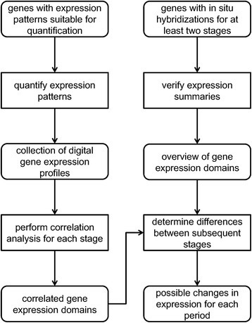 Workflow overview. The information stored in the Kahi Kai gene expression database has been processed into convenient formats for two partly overlapping sets of genes. These processing methods and the methods used for additional analyses are described in the text. While this workflow may seem to converge to a single final result, all intermediate results can be explored for multiple purposes