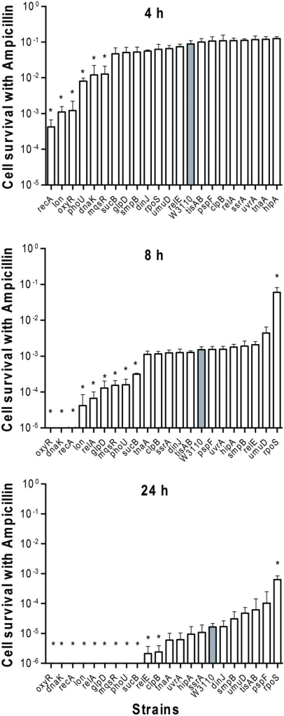 Deletion mutant ranking depends on cell survival over time under conditions of ampicillin exposure. Stationary phase cultures of W3110 (gray bars) and single-gene mutants (white bars) were diluted 100-fold and exposed to 100 μg/ml ampicillin for 4, 8, and 24 h. The data for each mutant was plotted and compared with that of W3110. Error bars indicate the standard deviation (n = 3). The asterisk indicates statistical significance as determined using Mann–Whitney U tests (∗P < 0.05).