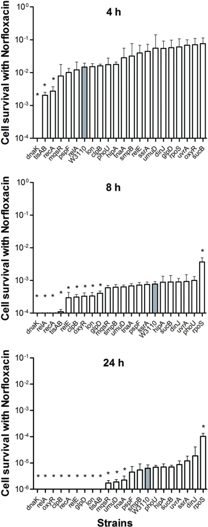 Deletion mutant ranking depends on cell survival over time under conditions of norfloxacin exposure. Stationary phase cultures of W3110 and single-gene mutants were diluted 100-fold and exposed to 4 μg/ml norfloxacin for 4, 8, and 24 h. The data for each mutant was plotted and compared with that of W3110. Error bars indicate the standard deviation (n = 3). The asterisk indicates statistical significance as determined using Mann–Whitney U tests (∗P < 0.05).