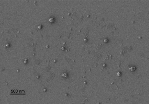 SEM image of 5-FU-loaded nanoparticles.Abbreviations: SEM, scanning electron microscopy; 5-FU, 5-fluorouracil.