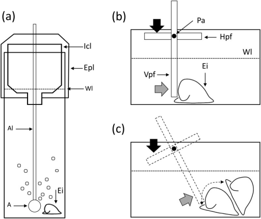 Schematic representations of the rearing bottles (a) and chamber used to measure dislodgement force (b-c).A: air stone, Al: plastic airline, Epl: external plastic lid; Icl: Internal conic lid; Pa: pivoting axis or fulcrum; Hpf: horizontal pivoting flap; Vpf: vertical pivotal flap; Wl: water level; Ei: experimental individual. In (c) the dashed contour depicts the position of the pivoting flap after the dislodgement force had been applied and the Ei was dislodged from the substratum. The black arrow depicts the point where the vertical force with the digital push-dynamometer was applied to the Hpf, and the grey arrow depicts the place where the resulting horizontal force of the Vpf was applied against the Ei.
