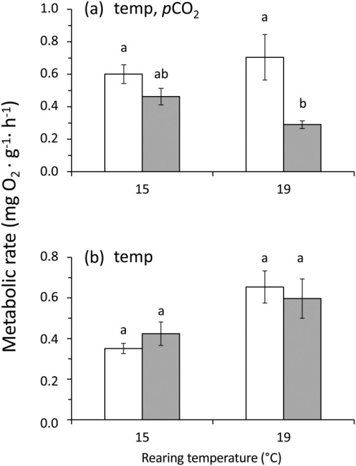 Concholepas concholepas.Effect of two different levels of pCO2 and temperature on the metabolic rate (mean ± SE) measured in small juvenile individuals after 4.8 (a) and 5.8 (b) months of rearing in the experimental conditions. For each panel, the designations 'temp' and 'pCO2' indicate significant temperature or pCO2 (2-way ANOVA). Open and filled bars represent measurements conducted in individuals reared at current-day and high pCO2 levels respectively. In (a) the metabolic rates were measured under standard conditions of pCO2 (current-day) and temperature (15°C). However, in (b) the metabolic rates were measured at the same conditions used during rearing. Different letters above the bars indicate significant differences (p < 0.05) in Tukey's HSD post hoc test on the 2-way ANOVA analysis.