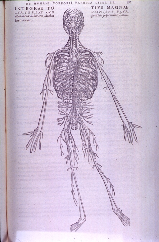<p>A full-length view of the arterial system.</p>