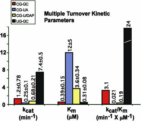 Kinetic constants of various pATSerCG derivatives cleaved by M1 RNA under multiple turnover conditions as indicated. The constants were determined at pH 7.2 as described in Materials and Methods. Given kcat and Km values are averages of several independent experiments and experimental errors are given as '±'. The kcat/Km values were calculated using the kcat and Km numbers.