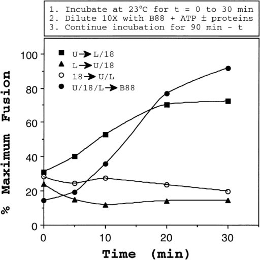 Uso1p action generates a dilution resistant intermediate. Isolated vesicles were mixed on ice with acceptor membranes  and individual fusion factors Uso1p (U), LMA1 (L), and Sec18p  (18), or the set of fusion factors together (U/L/18). In these experiments, the concentrations of acceptor membranes, vesicles,  and fusion factors were half of the standard condition (described  in Fig. 7). After incubation at 23°C for various times, reactions  were diluted 10-fold with one of the following: buffer containing  ATP, LMA1, and Sec18p (L/18); buffer containing ATP, Uso1p,  and Sec18p (U/18); buffer containing ATP, Uso1p, and LMA1  (U/L); or buffer containing ATP alone (B88). Diluents contained  purified proteins at levels that produce initial concentrations of  each indicated species. Each tube was incubated at the reaction  temperature for a total of 90 min. In this experiment, background  fusion (vesicles, acceptor membranes, and ATP, undiluted) was  1.7% and maximal fusion (vesicles, acceptor membranes, fusion  factors, and ATP, undiluted) was 12%.