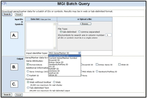 Screenshot showing the new MGI Batch Query Tool. Inputs into the query form (A) can be lists of sequence or gene identifiers. The output of the query (B) can be gene identifiers from other resources, genome location, gene nomenclature, functional annotations and phenotype annotations. Output from the batch query form can be displayed as a web form or as a tab-delimited file (C).