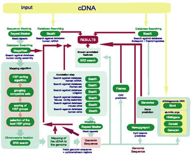 Data flow and dependencies of applications in cDNA2Genome. programs used by cDNA2genome during the annotation process.