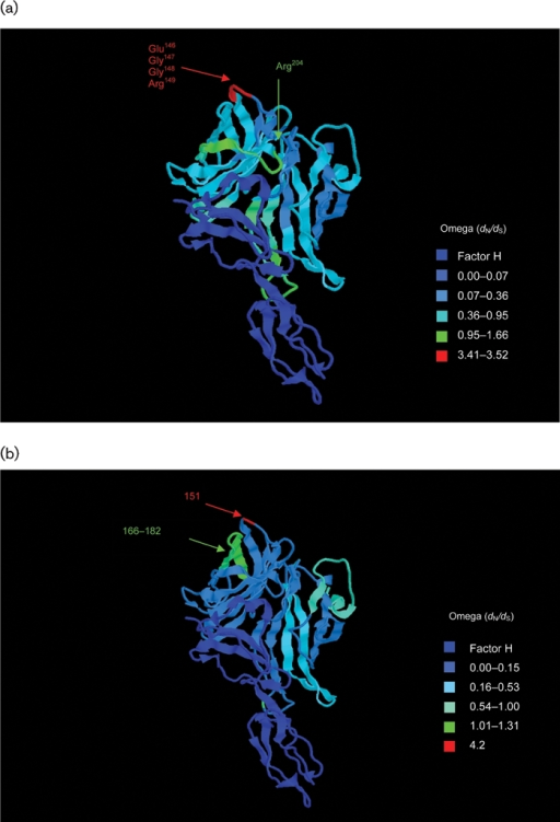 Structure of the fH–fHbp complex (Schneider et al., 2009), with temperature colouring using per-site point estimates of ω for (a) subfamily B/variant 1 sequences, (b) subfamily A/variant 2 sequences and (c) subfamily A/variant 3 sequences. Peptides indicated in (a) are putative bactericidal epitopes identified elsewhere (Giuliani et al., 2005; Welsch et al., 2004; Scarselli et al., 2009). In (b) and (c), positively selected sites are indicated. Note: subfamily A/variant 2 and subfamily A/variant 3 differ in length from subfamily B/variant 1 by +4 bp (e.g. Glu151 is equivalent to Glu147 in variant 1) and +7 bp (e.g. Glu154 is equivalent to Glu147 in variant 1), respectively.