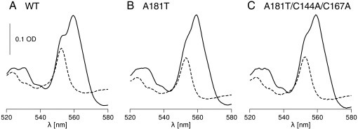 Optical redox difference spectra of cytochrome bc1 isolated from wild type (A), A181T mutant (B) and A181T/C144A/C167A mutant (C). Solid and dashed lines correspond to dithionite minus ferricyanide and ascorbate minus ferricyanide spectra, respectively.