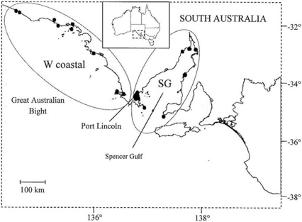 Sampling regions in South Australia from which carcasses of common dolphins were collected.Black dots within regions represent localities for carcasses. Samples are grouped into two geographic areas: western coastal (W coastal) and Spencer Gulf (SG).