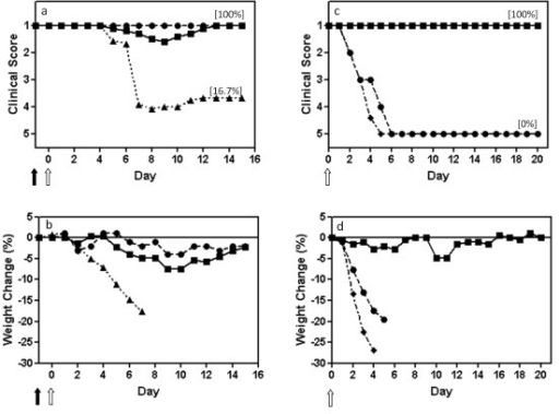 A single dose of influenza A virus 244/PR8 given 1 day before infection protects elderly (18-month-old) mice from influenza, and these mice are then immune to further challenge. Mice were anaesthetized and inoculated intranasally on day -1 with 244/PR8 or inactivated 244/PR8 (solid arrow), and were infected on day 0 (open arrow) with influenza A/WSN (panels a, b). Mice that had survived WSN challenge through treatment with protecting virus in a, b were challenged with a second high dose of WSN 3 weeks after the first infection (panels c, d) to establish their immune status. These mice were inoculated intranasally (open arrow) with a 500-fold higher dose of WSN than used in (a, b). (a, c) mean clinical disease assessment; (b, d) percentage weight change. ■, 12 μg 244/PR8 followed by WSN (n = 5); ▲, 12 μg inactivated 244/PR8 followed by WSN (n = 6); ●, 12 μg 244/PR8 followed by diluent (n = 2); ◆, naïve 5-week-old mice given only the high dose WSN challenge (n = 5). Mice were assessed clinically and weighed daily. Weights are not presented after 2 or more mice died. The percentage of mice surviving at the end of the study is in parenthesis. Data are representative of two separate experiments.