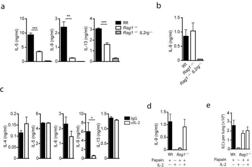IL-9 expression in ILC is dependent on IL-2 and the adaptive immune systema) Cytokine concentration in the lung homogenate of papain challenged wt (black bars) Rag1−/− (white bars) and Rag2−/−IL2rg−/− (grey bars) mice 18 h after the last papain re-challenge ***p=0.0001, **p=0.001 b) Concentration of IL-9 in the supernatant of MACS sorted ILC isolated from papain challenged wt Rag1−/− and Rag2−/−IL2rg−/− mice stimulated in vitro with IL-2 overnight. c) Cytokine concentration in the lung homogenate of papain immunized B6 mice treated with neutralising IL-2-specific (white bars) or IgG isotype control (black bars) antibody 18 h after challenge *p=0.03. d) IL-9 protein concentration in the lung homogenate of papain challenged wt (black bars) and Rag1−/− mice (white bars) analyzed 18 h after the last papain re-challenge. Where indicated papain challenged or control (PBS challenged only) Rag1−/− mice were treated intranasally with 500 ng recombinant mouse IL-2 3 h after the last papain re-challenge. e) Absolute number of ILC in the lung of papain challenged wt and papain challenged Rag1−/− mice left untreated or treated with intranasal IL-2. (treatment regimens are show in Supplementary Fig.9). Data represents two independent experiments with four mice in each experimental group (mean ±SEM).