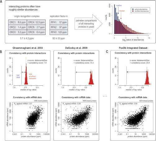 Data set quality. The quality scoring system in PaxDb is based on the assumption that interacting proteins should have roughly similar abundances. A, left: two examples of protein complexes in S. cerevisiae, both involved in replication but with different abundance levels. Right: abundance ratios of all interacting protein pairs, plotted as histograms. Shuffled data (in red) shows a shift toward higher ratios compared with actual data (in blue). B, For two different data sets, both the median of the actual ratios (in blue) and the distribution of medians obtained from 500 × shuffling of abundances (in red) are shown. The PaxDb score corresponds to the z-transformed distance. The same two data sets are plotted against RNAseq data below. C, The consolidated data set, with a higher PaxDb score, also correlates better with mRNA abundances, and covers more proteins. Yeast mRNA quantification data is from ref (62).