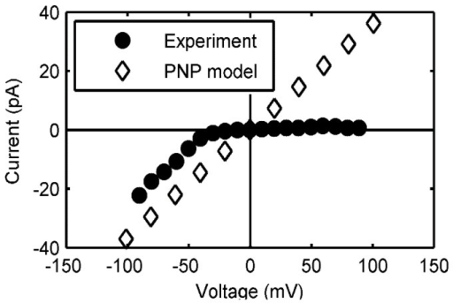 Current-voltage relationship of a protegrin pore.