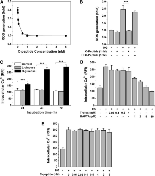 C-peptide inhibits high glucose (HG)–induced ROS generation but has no effect on intracellular Ca2+. Cells were incubated with HG (33 mmol/L d-glucose) in the presence of the indicated concentrations of C-peptide, Trolox, and BAPTA-AM for 48 h, and intracellular ROS and Ca2+ levels were determined as described in RESEARCH DESIGN AND METHODS. A: Dose-dependent inhibition of HG-induced ROS generation by C-peptide. B: Heat-inactivated (H1) C-peptide (1 nmol/L) has no effect on HG-induced ROS generation. C: Time course changes in intracellular Ca2+ level by control, l-glucose, and d-glucose. D: BAPTA-AM, but not Trolox, has a dose-dependent inhibitory effect on HG-induced elevation in intracellular Ca2+ levels. E: C-peptide does not inhibit HG-induced elevation of intracellular Ca2+. Results are expressed as mean ± SD from three independent experiments. ***P < 0.001.