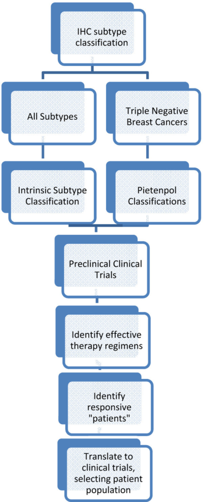 Schematic of preclinical clinical trials: from classification to patient selection for clinical trials. Based on the advances in generating patient-derived xenografts and breast cancer subtyping, preclinical trials can be designed to provide subtype-specific outcome data and to identify molecular profiles of tumors that respond to specific therapies, thus having the potential to better guide patient selection for clinical trials and to reduce costs and ineffective treatment options for patients. Patient-derived xenografts are subtyped by standard immunohistochemistry (IHC) and by molecular profiling and then placed on each arm of a preclinical clinical trial for direct comparison of treatment strategies. The treatment response is then correlated with subtype classification to identify the responsive versus non-responsive tumor subtypes that correspond to patient tumor subtypes to guide selection for clinical trials.
